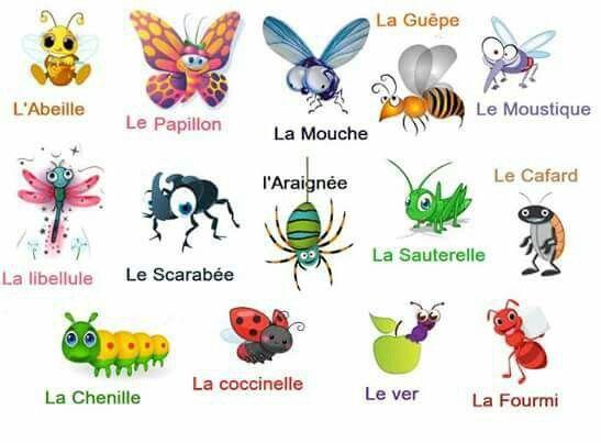 abeille synonyme