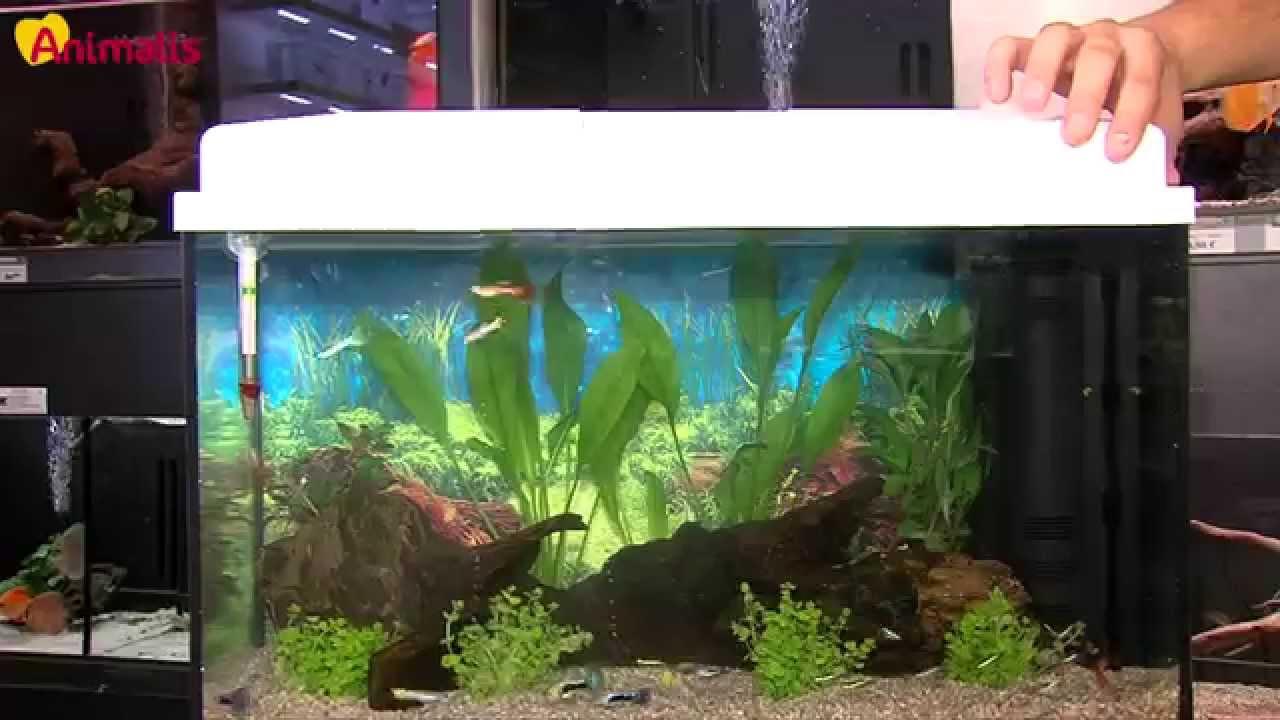 aquariophilie pour débutant