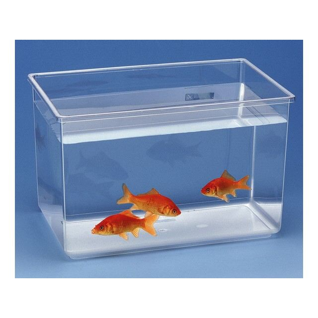aquarium combattant pas cher