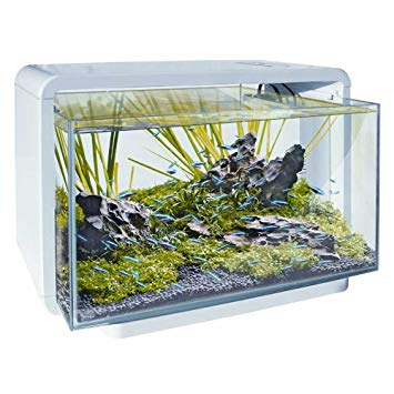 aquarium superfish home 25