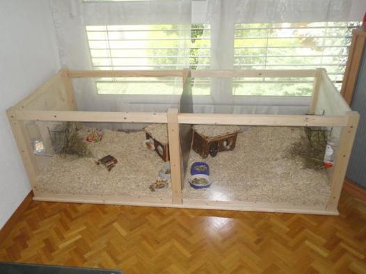 cage pour cochon d'inde fait maison