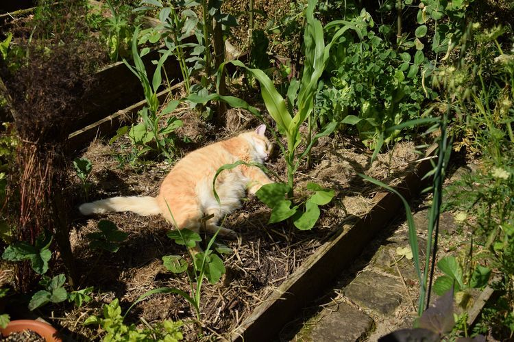 chat potager