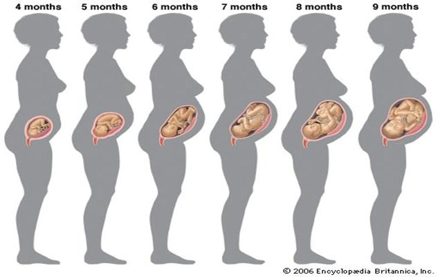 mois par mois de grossesse