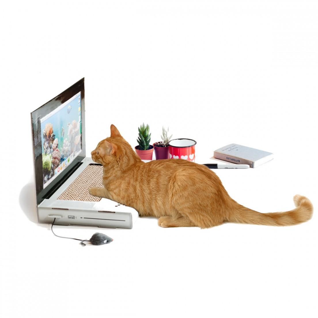 ordinateur pour chat