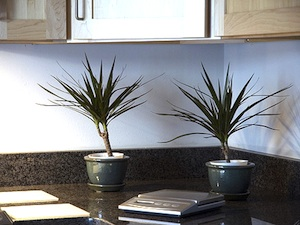 plante pour cuisine
