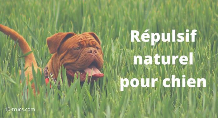 répulsif maison pour chien