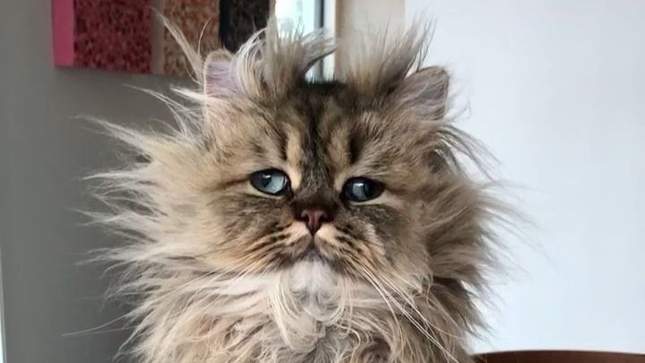 réveil chat