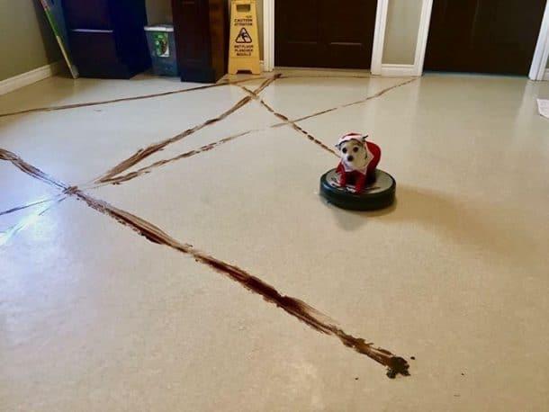 robot aspirateur chien