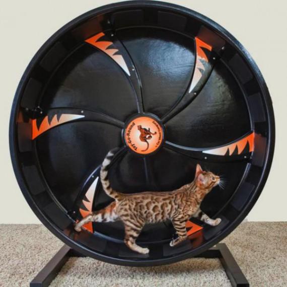 roue pour chat pas cher